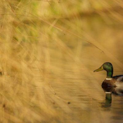 ¿Vamos a practicar Birdwatching al Delta del Llobregat?