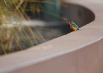 Kingfisher at the hostel