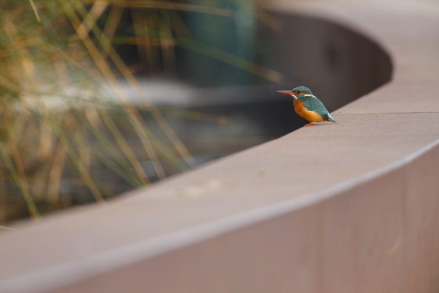 ¿Qué aves pasan el invierno en el Delta del Llobregat?