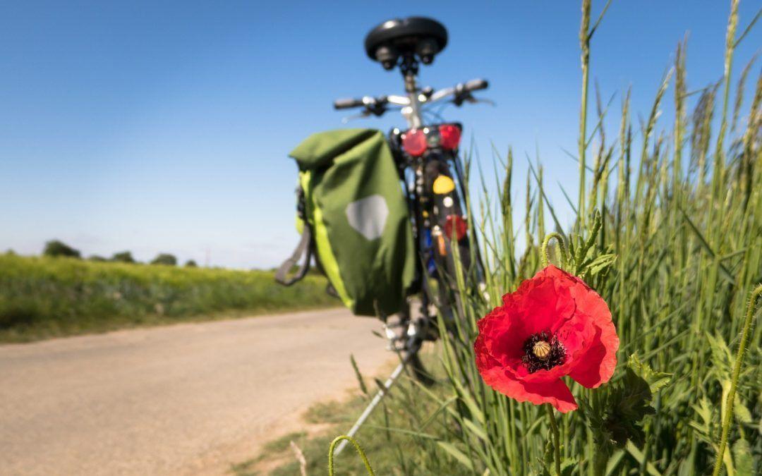 Lloguer de bici gratuït amb la teva reserva online!