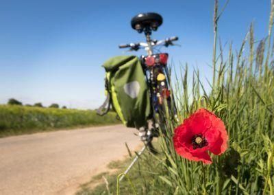 Excursión en bicicleta