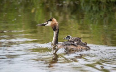 ¿Qué aves pasan el verano en el Delta del Llobregat?