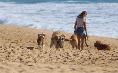 10 Playas para disfrutar del verano con tu perro