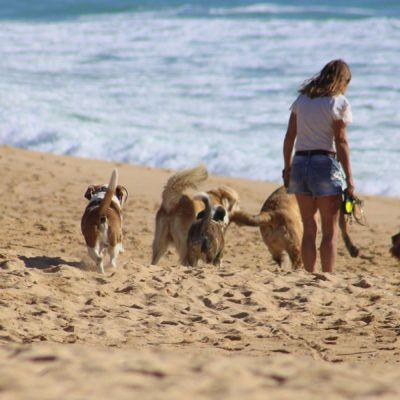 10 Platges per gaudir de l'estiu amb el teu gos